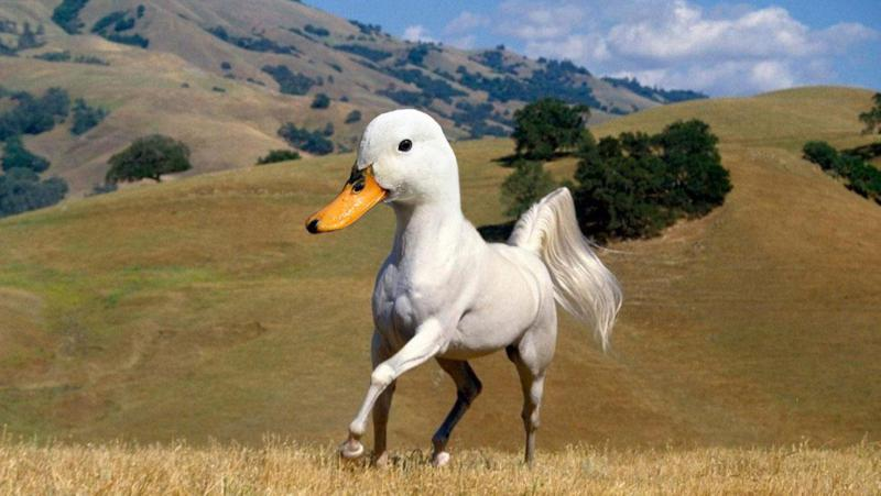 Bizarre-Animal-Hybrids-That-Look-Surprisingly-Realistic_800x451