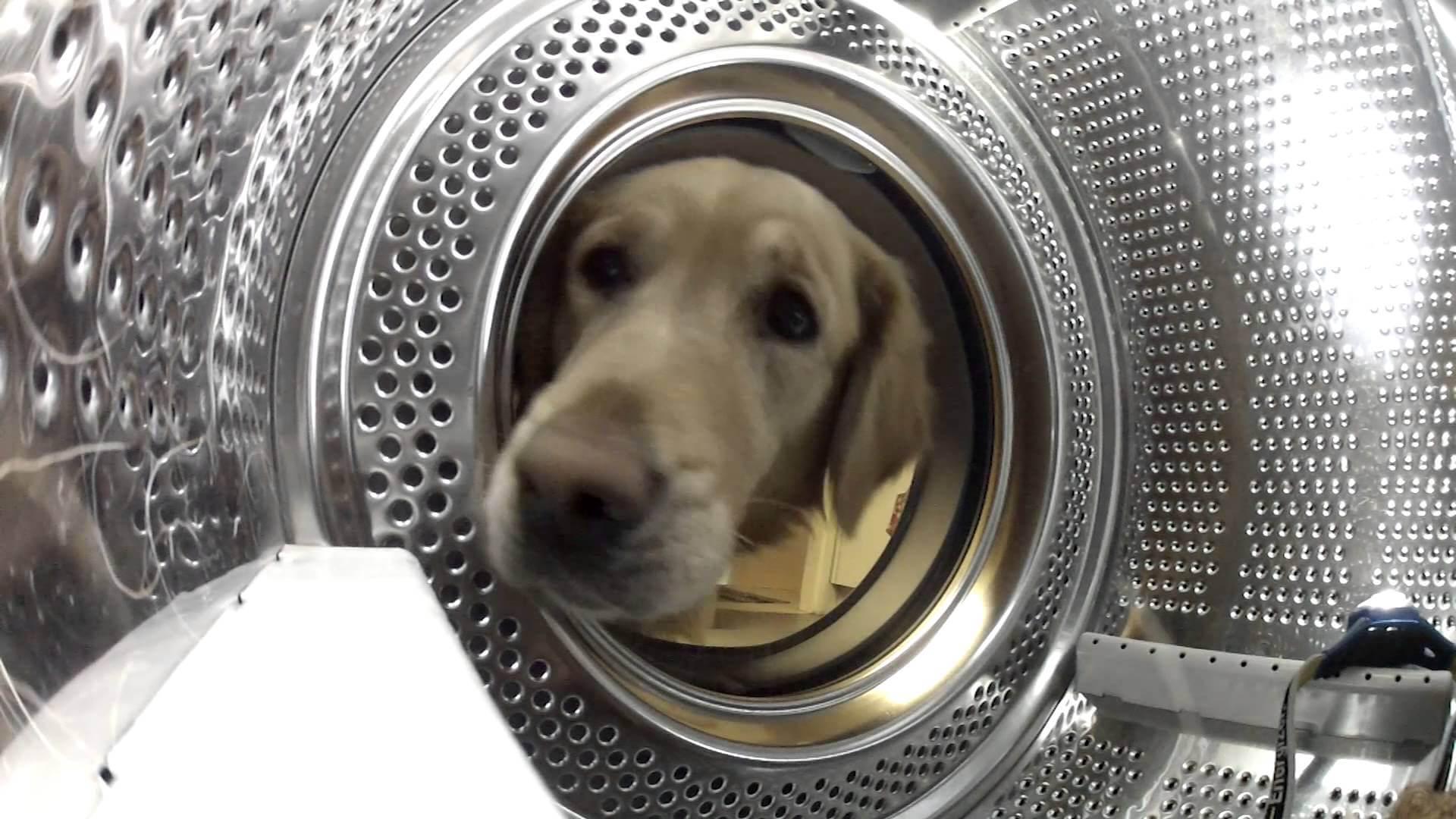 Ein Kuscheltier vor dem Waschmaschinentod retten