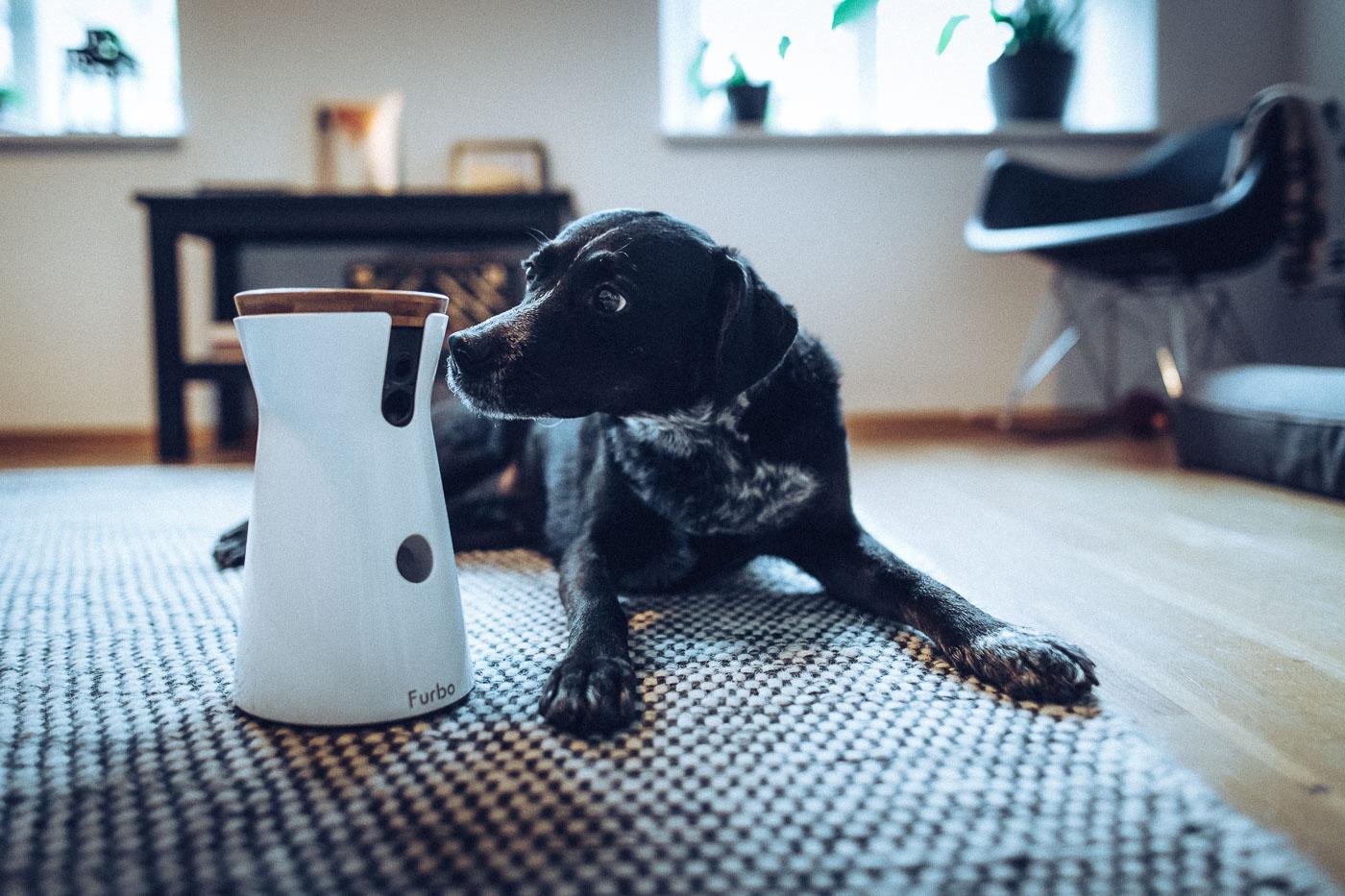 Hund beschnüffelt die Furbo Hundekamera