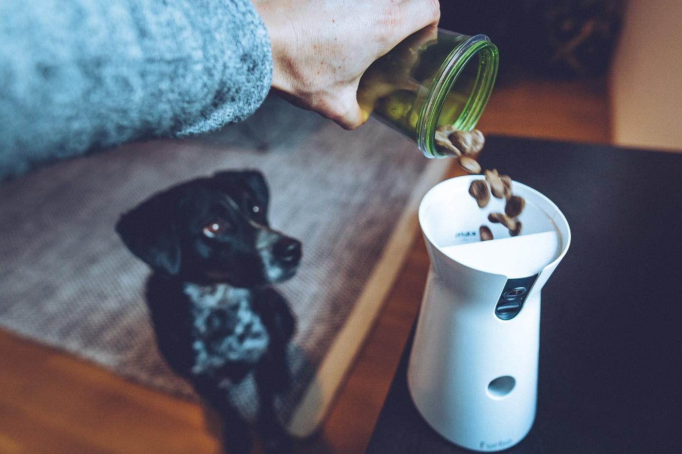 Hund schaut beim befüllen der Furbo Hundekamera zu