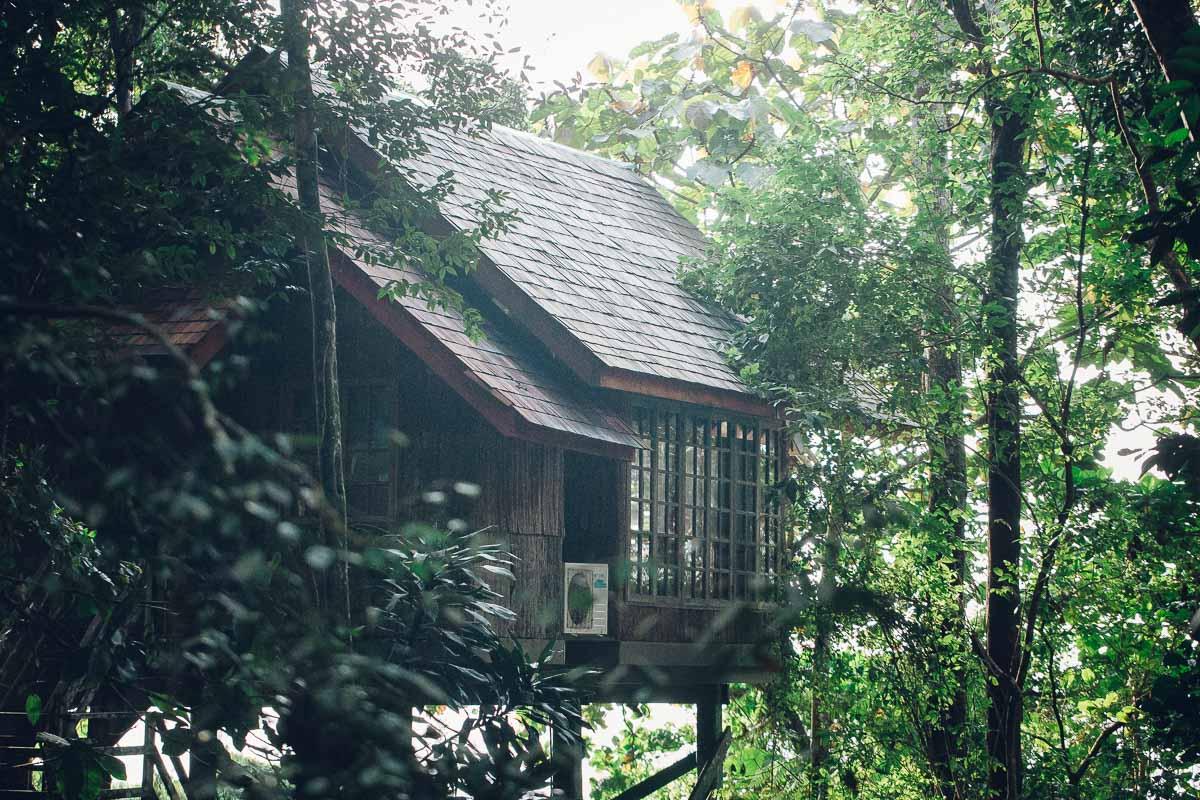 Kuching Borneo Jungle