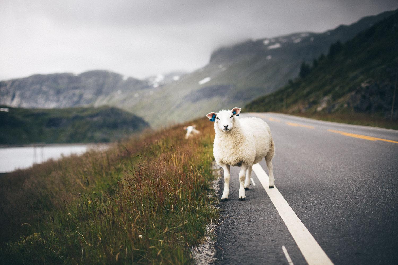 Norwegen_Landschaft_-54