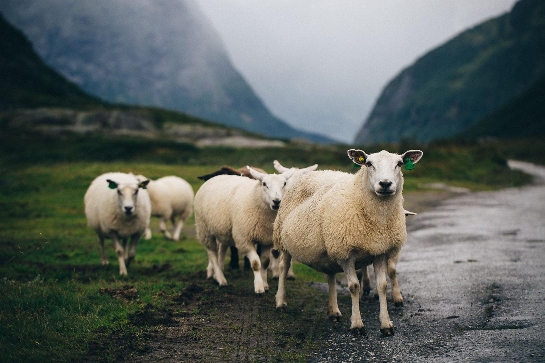 Norwegen_Landschaft_132