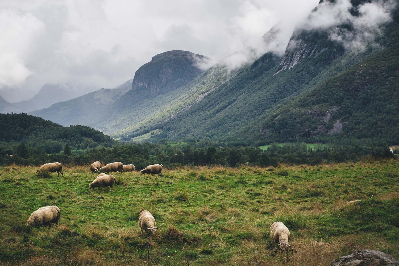 Norwegen_Landschaft_17