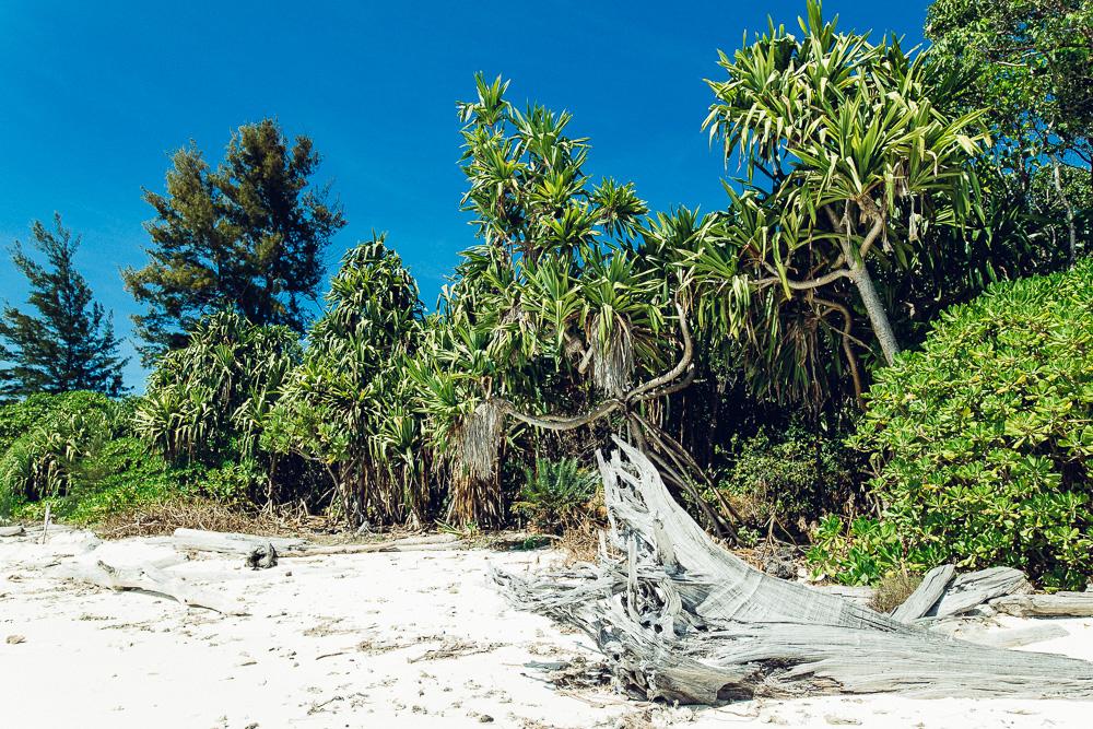 Pulau_Mengalum_Borneo-16