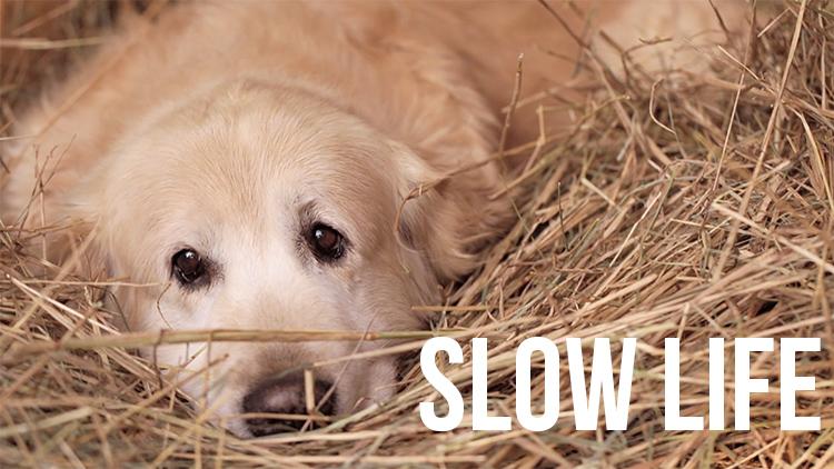 Slow Life – Ein Kurzfilm über Anton