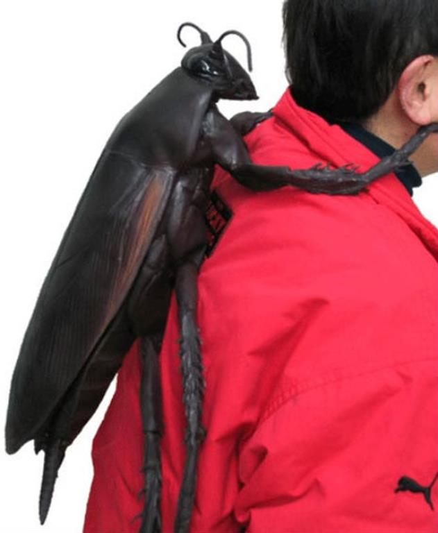 kakerlaken rucksack